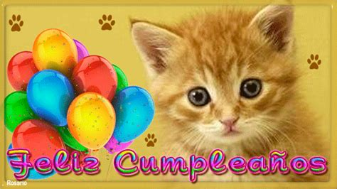 imagenes cumpleaños gatitos im 225 genes gif de gatos con frases de feliz cumplea 241 os