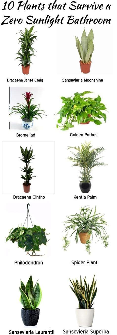 plants that survive with no light best 25 bathroom plants ideas on pinterest best