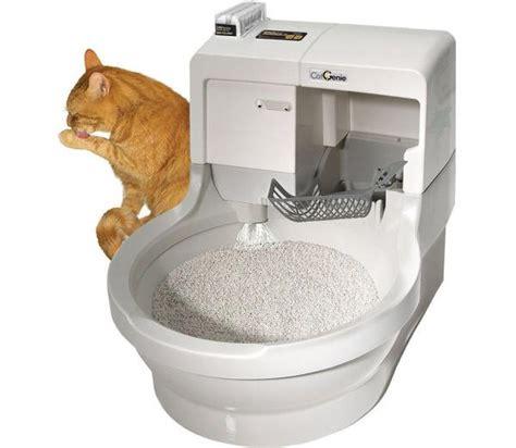 cassetta gatti autopulente due gatti in casa stessa lettiera spiegazione