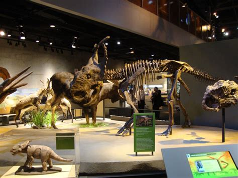 alaska dinosaur exhibit opens in dallas museum alaska