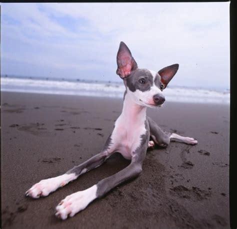 Mini Encyclopedia Dogs Explore The Wonderful World Of Dogs Ency Min the wonderful world of may 2014 my so called crafty
