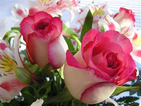 wallpaper rose flower beauty flowers wallpapers art photography beauty desktop