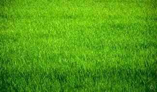 Blue Bush Flowers - garden grass texture freeartbackgrounds com