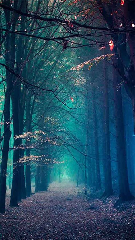 hd wallpapers for iphone 6 zedge blue forest 15 beautiful scenery photography iphone