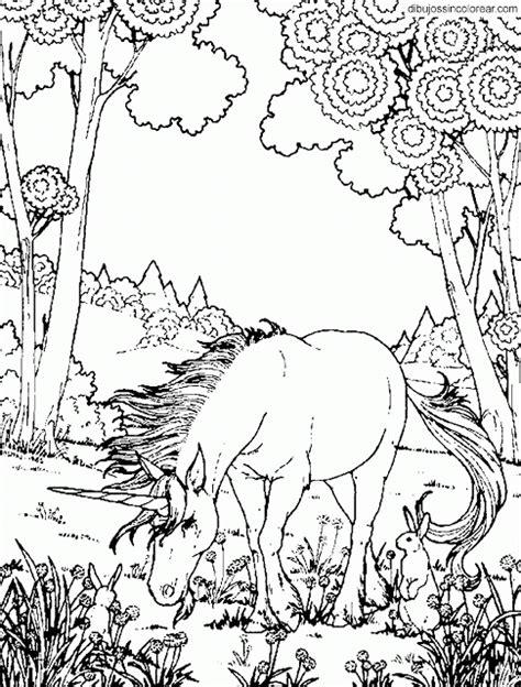 imagenes reales para colorear dibujos de unicornios para colorear