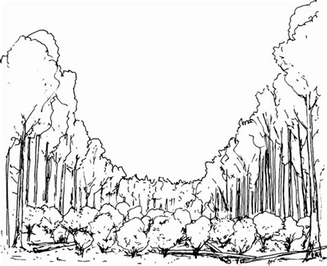 mangrove tree coloring page preparing to plant tropical trees