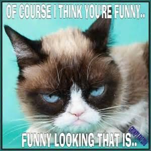 Kat Meme - another grumpy cat meme by the other grumpy kat grumpy cat