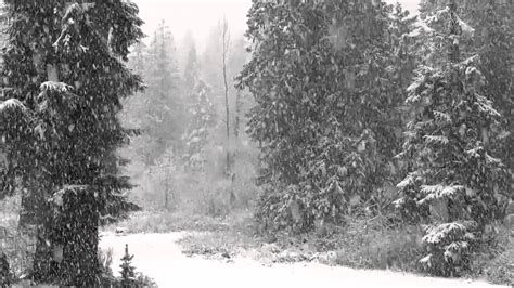 Snow Is Falling fast falling snow 1080p hd without 4 hours