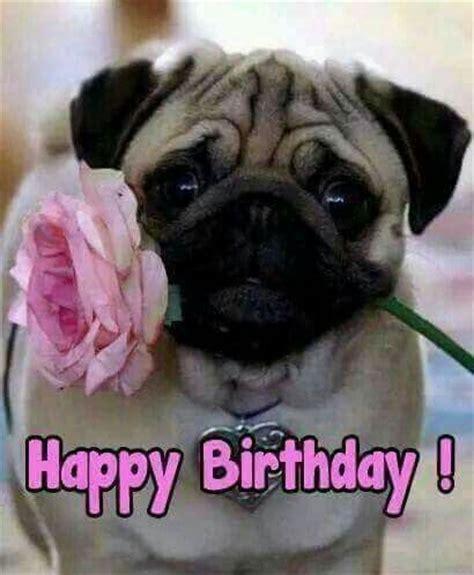 Happy Birthday Pug Meme - the 25 best happy birthday pug ideas on pinterest pug