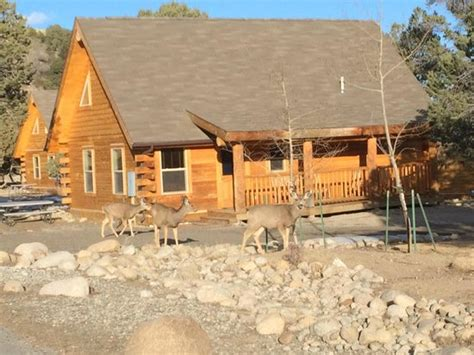 Mt Princeton Springs Cabins deer in front of cabin picture of mount princeton