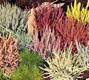 Garten Blumen Kaufen 867 by Pflanzen Kaufen Bei Obi