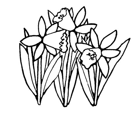 spring daffodils black and white church flower clipart