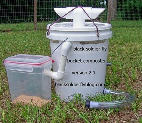 soldier fly composting northwest geo metro hobby shop