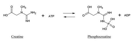 is creatine kinase creatine kinase mm aalto scientific