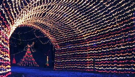 24 Best Stl Winter Wonderland Images On Pinterest St Tilles Park Lights