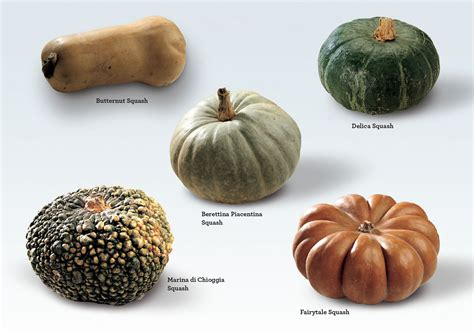winter squash varieties www imgkid com the image kid has it