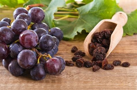 are raisins bad for dogs grapes and raisins can be dangerous for your pets thriftyfun