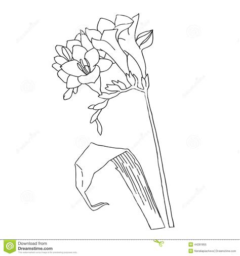 Freesia Sketch Black And White Stock Vector Image 44281855 Vector Image Black White Sketch