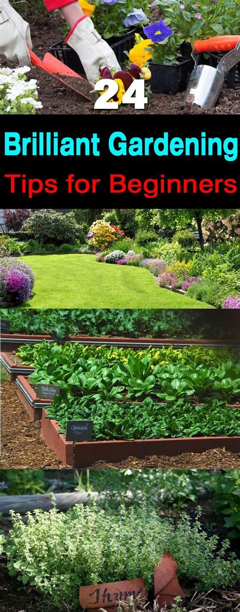 backyard gardening for beginners gardening for beginners archives my garden your garden