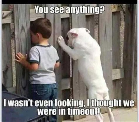 Funny Pictures Of Memes - funny memes kid dog timeout loldamn com