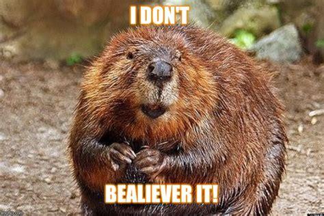 Beaver Meme - beaver believe imgflip