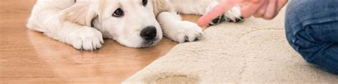 cleaning jute rugs pet stain carpet cleaning tips pet stains carpet ideas