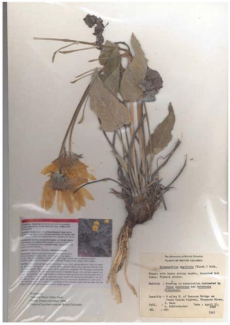 Interior Species by Interior Plant Species Cultivating Forest Stewardship