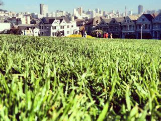 bay area housing bubble lauren smiley the new yorker