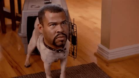key and peele puppy we rank the 100 best key peele sketches so far screener