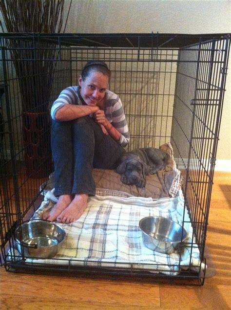 great dane crate lenneke nieuwland is crate great dane puppy oakley and maybe herself