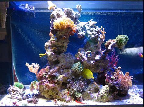 aquascaping reef aquascaping acuarios pinterest