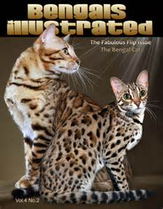 bengal cat colors bengal colors patterns bengal cats bengals illustrated