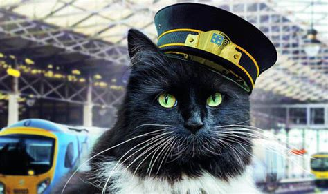 felix the railway cat books huddersfield station s railway cat felix is the subject of