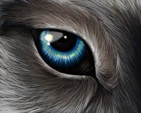 wolf eye color wolf s eye by ehioe on deviantart