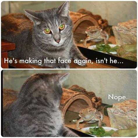 Cat Meme Faces - he s making that face again cat humor