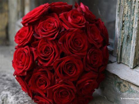 imagenes romanticas flores imagens rom 226 nticas de flores imagens de flores