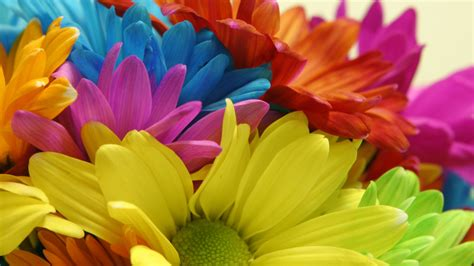 color flower 30 beautiful coloured flowers pictures size hd