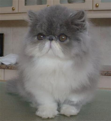 Sho Kucing Untuk Jamur mengatasi jamur pada kucing neko s blog