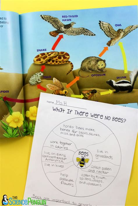 picture book lessons picture book science lesson bees and ecosystems the