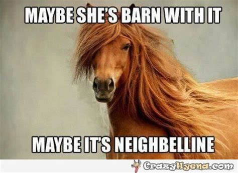 1000 images about horse comedy on pinterest