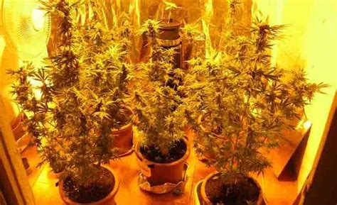 coltivare marijuana in casa senza lade ragusa affitta una casa per coltivarci marijuana
