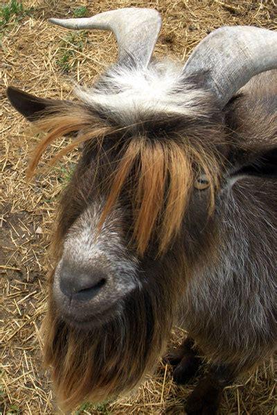 Harga Minyak Rambut Schwarzkopf d a r i b i n t a n g masalah rambut berminyak