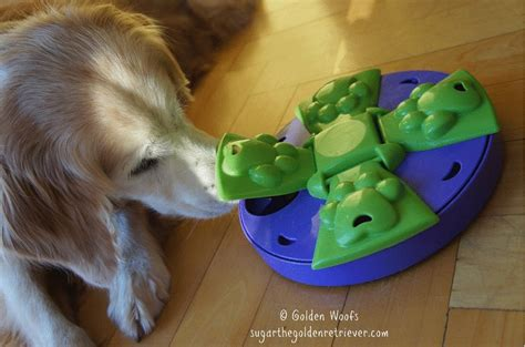 puzzle for dogs puzzle toys for dogs wow
