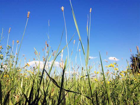 klimmzüge im liegen einfach im gras liegen foto bild wiese natur