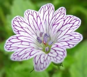 the best flowers aren t always the biggest serenity secret garden