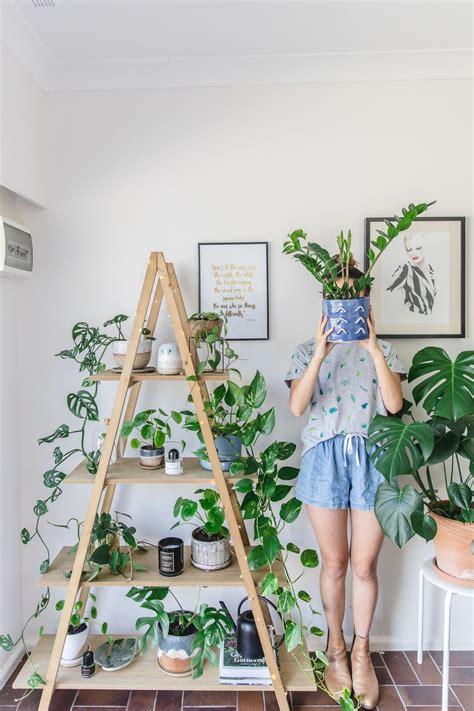 best living room plants best 25 plant decor ideas on pinterest house plants