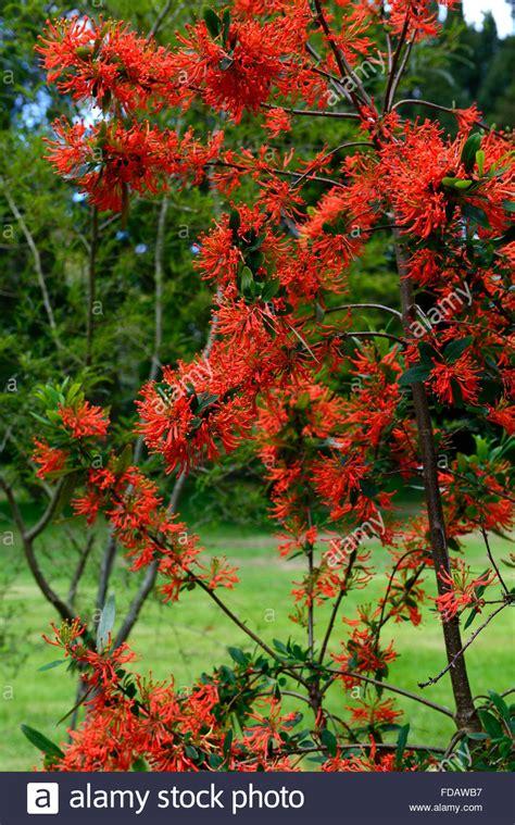 Arbustes Fleurs Rouges by Arbustes Fleurs Arbustes Fleurs Clochettes Rouges