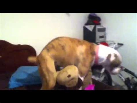 pillow humpers humps pillow pet must