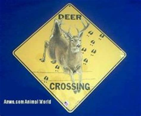animal crossing signs   anwocom animal world