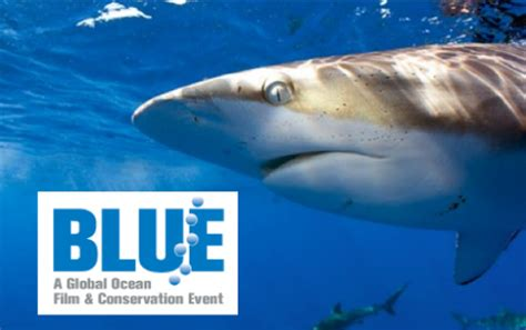 blue film festival introducing the blue ocean film festival and conservation